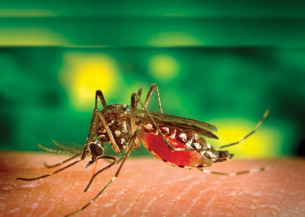 Dengue_Capa